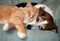 Собаки или кошки: а кого любите вы?