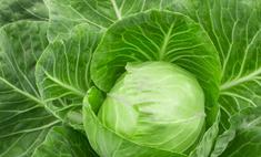 Полезные свойства тушеной капусты