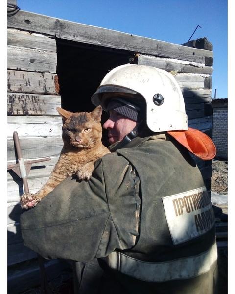 Кота спасли из горящего здания в Амурской области