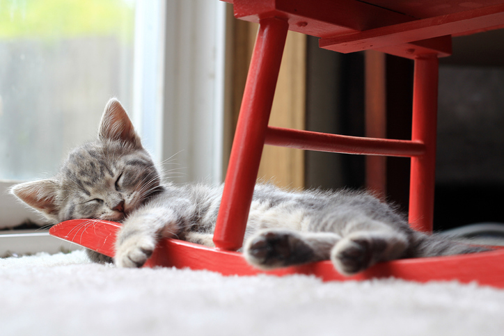 Фото №3 - Кот, просто кот: 101 кличка для питомцев