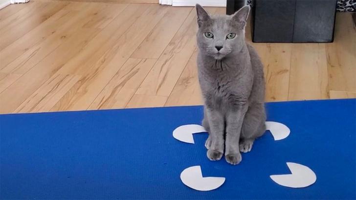 Фото №1 - Ученые рассказали про любовь кошек к воображаемым коробкам