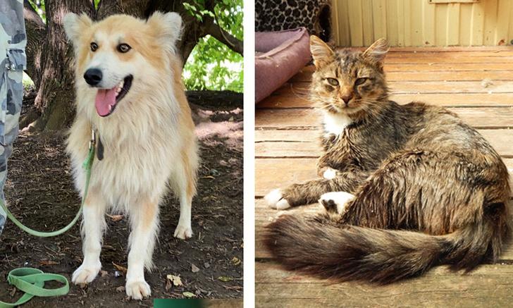 Фото №1 - Котопёс недели: кот Атаман и пёс Сочник
