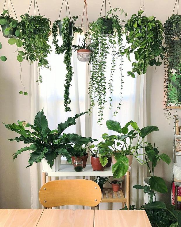 Фото №4 - Растения на кухне: 7 практичных идей