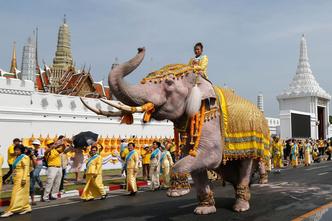 Фото №9 - Живые боги: каким животным поклоняются люди?
