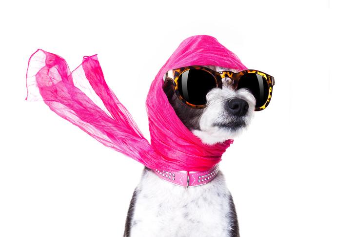 Фото №1 - Только от жизни собачьей: москвичи украсили своего питомца монограммой Louis Vuitton