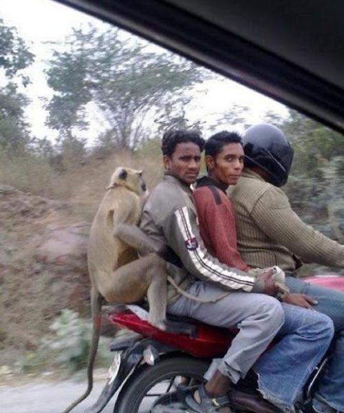 Фото №1 - Джугаад: индийские лайфхаки из того, что есть на помойке (много забавных фото)