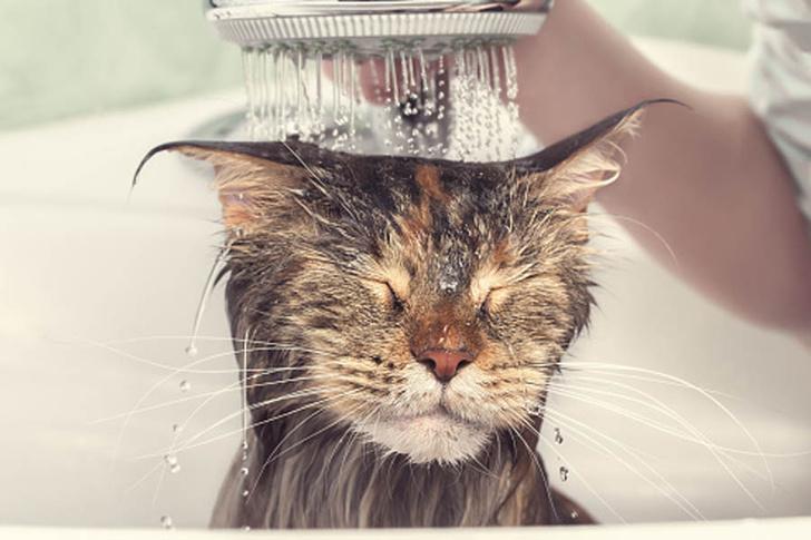 как купать кота фото