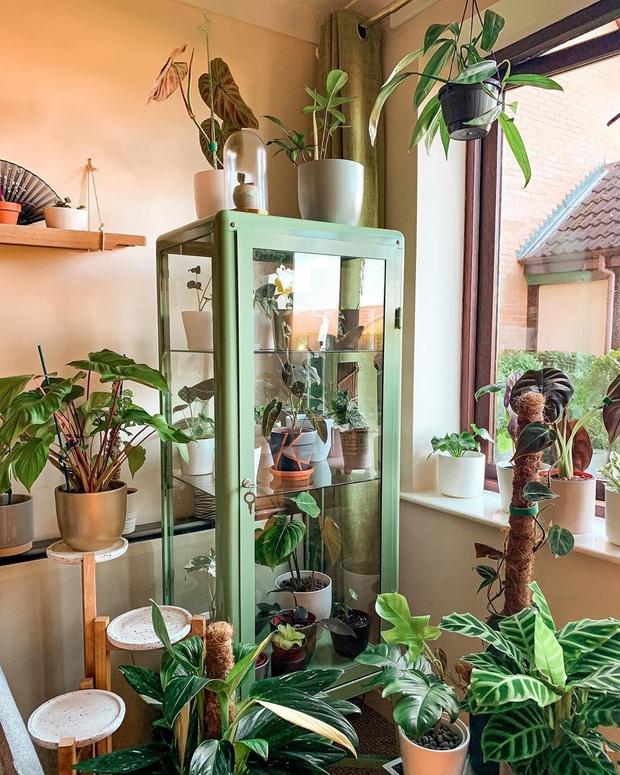Фото №3 - Растения в интерьере: 6 идей для создания мини-сада
