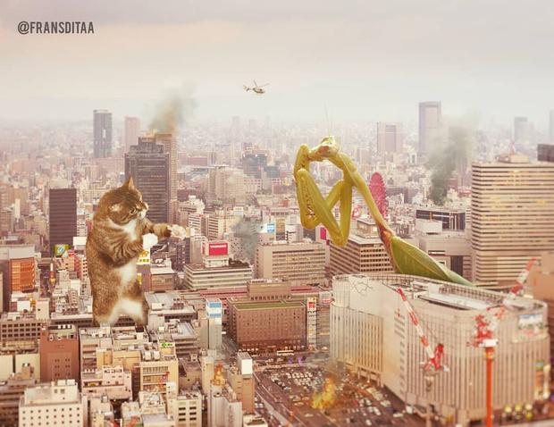 Фото №1 - Котзиллы наступают! Инстаграм дня, в котором гигантские котики захватывают мир 😽
