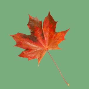Фото №5 - Тест: Выбери осенний листок и узнай, с чем тебе придется расстаться в сентябре 🍂