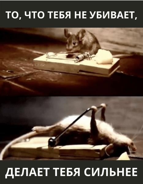 Фото №17 - Милота и угар: 20 дико ржачных мемов про животных