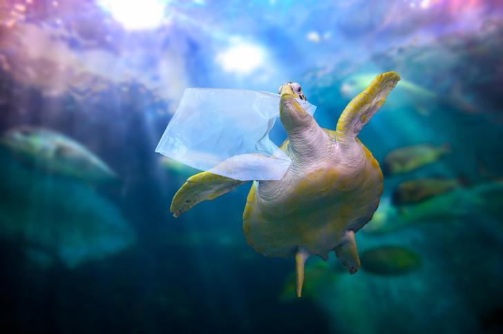 Фото №4 - Спасаем рыбок: самый милый и модный эко-тренд в косметике 🐟