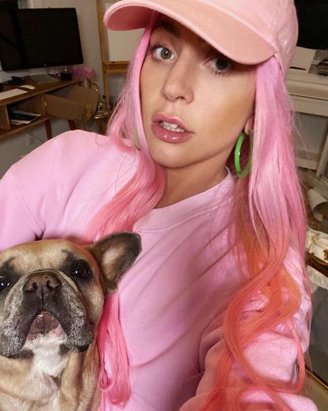 Леди Гага фото, бульдоги Леди Гаги фото, у Леди Гаги украли бульдогов