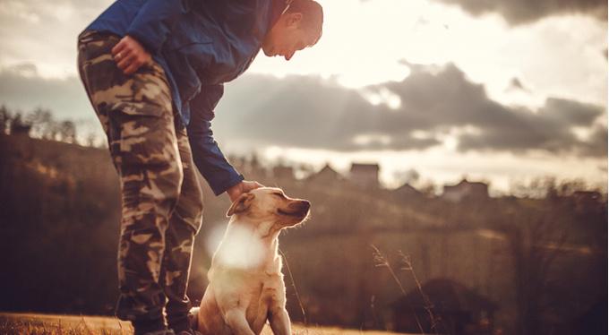 Человек — друг собаки: 5 правил обращения с питомцами