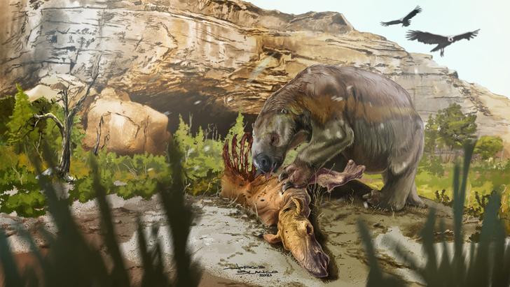 Фото №1 - Раскрыты неожиданные пристрастия древних ленивцев