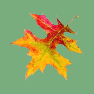 Фото №9 - Тест: Выбери осенний листок и узнай, с чем тебе придется расстаться в сентябре 🍂
