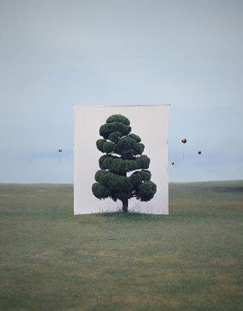 Фото №1 - Myoung Ho Lee's Trees