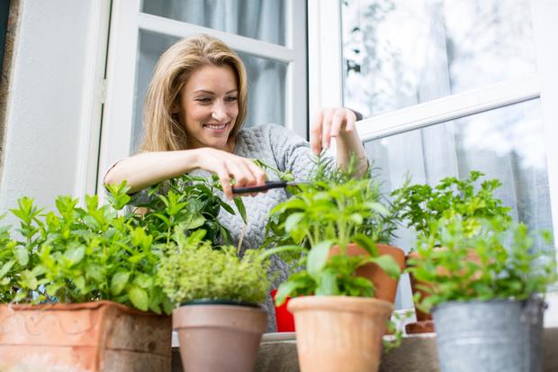 Фото №1 - 3 совета, как обустроить мини-огород у себя дома
