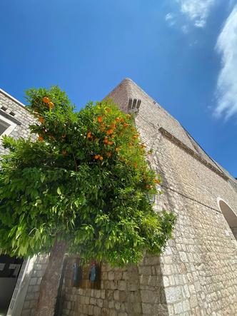 Фото №13 - Королевское спокойствие: как выглядит хорватский Дубровник в разгар пандемии и почему стоит поехать туда прямо сейчас