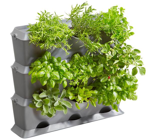 Фото №3 - 3 совета, как обустроить мини-огород у себя дома