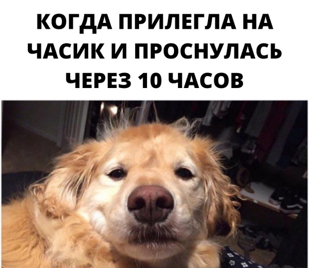 Фото №3 - Милота и угар: 20 дико ржачных мемов про животных