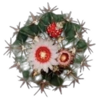 Фото №5 - Тест: Выбери кактус, и мы скажем, насколько ты колючая 🌵