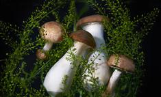 Как приготовить гриб курник: рецепт