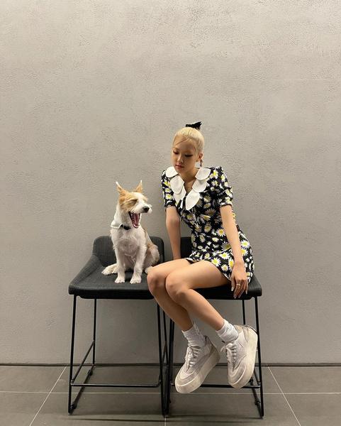 Фото №1 - Почему Розэ из BLACKPINK решилась приютить собаку? 🐶