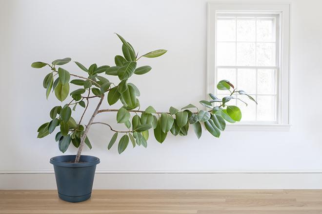 Фото №7 - Зарядись! 10 растений, которые улучшают самочувствие