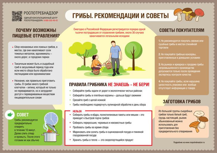 Фото №2 - В Роспотребнадзоре объяснили, почему грибы нужно варить сразу после сбора