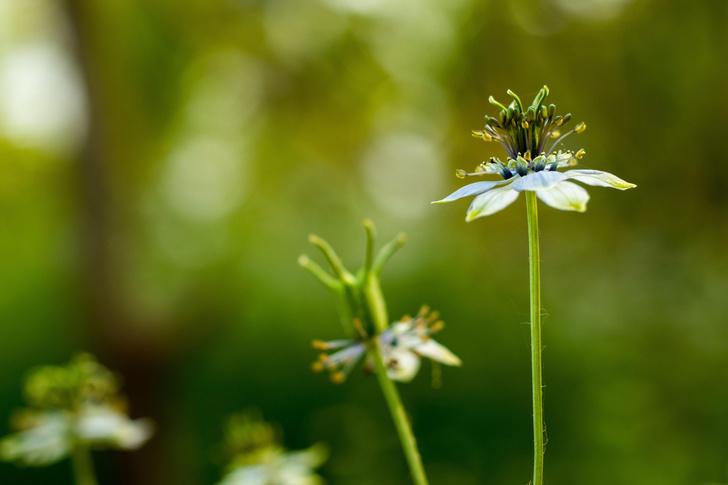 Фото №1 - Еще одно растение признали эффективным в борьбе с коронавирусом