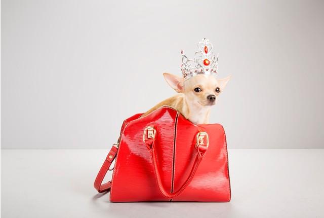 Фото №9 - Топ-15 самых популярных в России пород собак