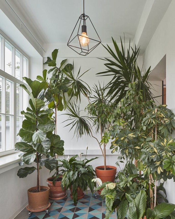 Фото №6 - Как освежить комнатные растения: 6 эффективных советов по уходу