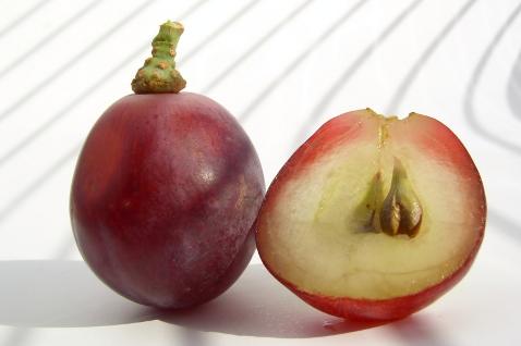 Фото №1 - Польза и применение масла виноградных косточек