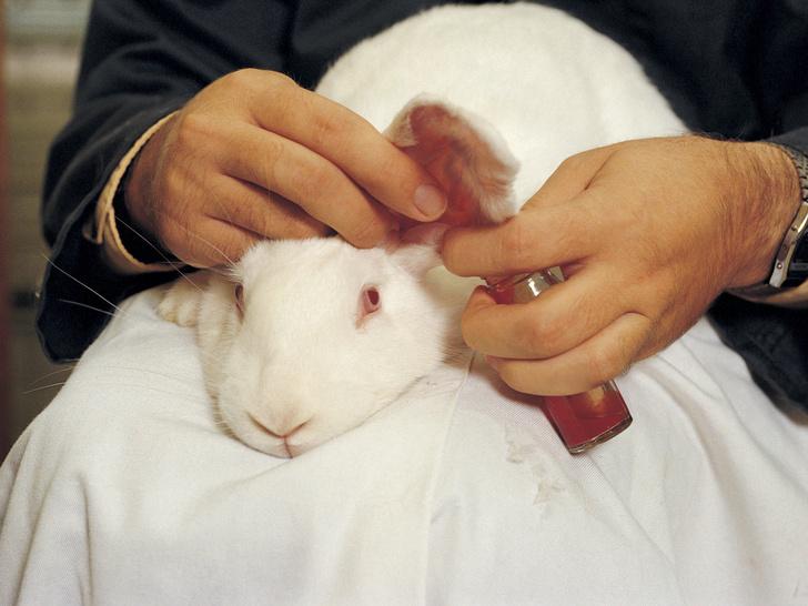 Фото №4 - Тестирование косметики на животных: жестокая правда, которую от нас скрывают