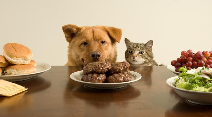 Фото №1 - 10 обычных продуктов, смертельных для котов и собак