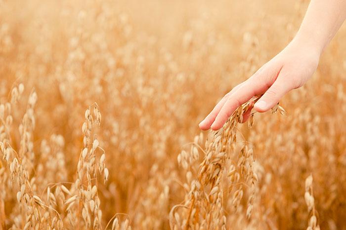 Фото №1 - Каша для малышей с родных полей