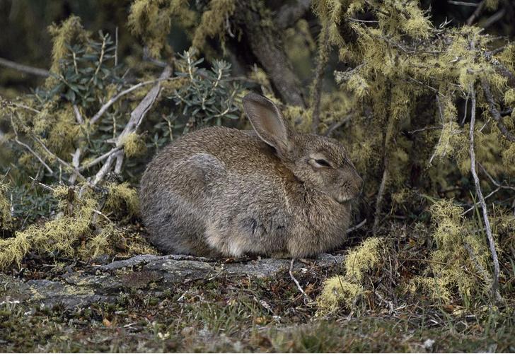 Фото №6 - Не только ценный мех: 11 удивительных фактов о кроликах