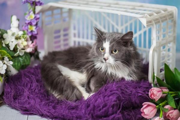 Фото №2 - Котопёс недели: кошка Анфиса и собака Туся