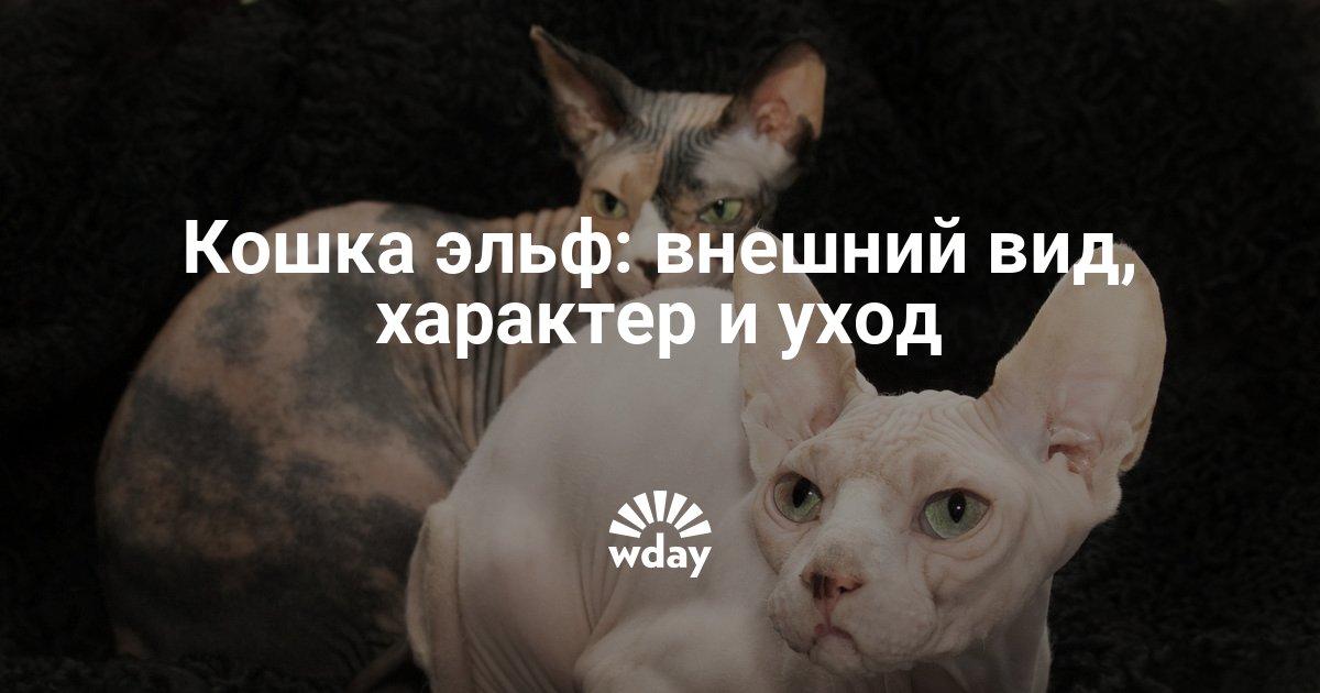 Особенности внешности характера разведения и содержания кошек породы эльф