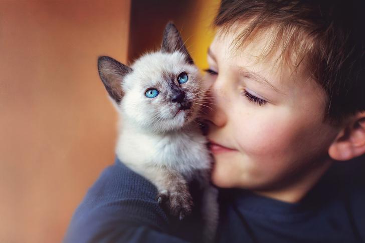 Фото №2 - 10 причин, почему у вас дома должен жить кот
