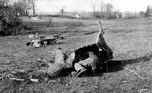 Фото №1 - Лежит лошадь— нельзя скушать: как французские снайперы использовали муляжи лошадей