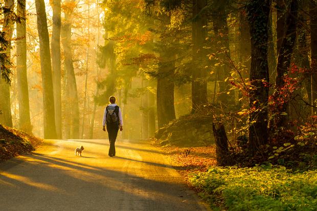 Фото №1 - Прогулка поможет победить стресс