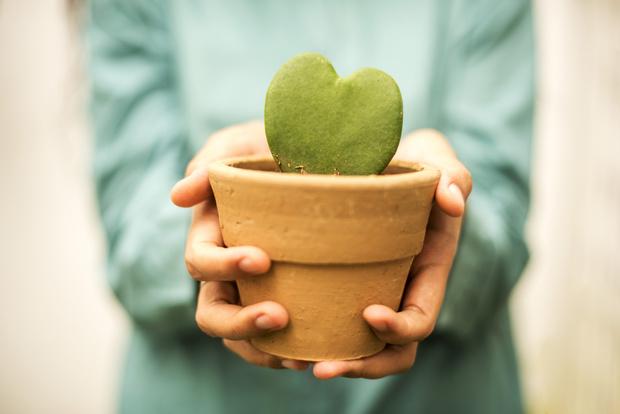 Фото №2 - Почему нельзя дарить саженцы и цветы в горшках