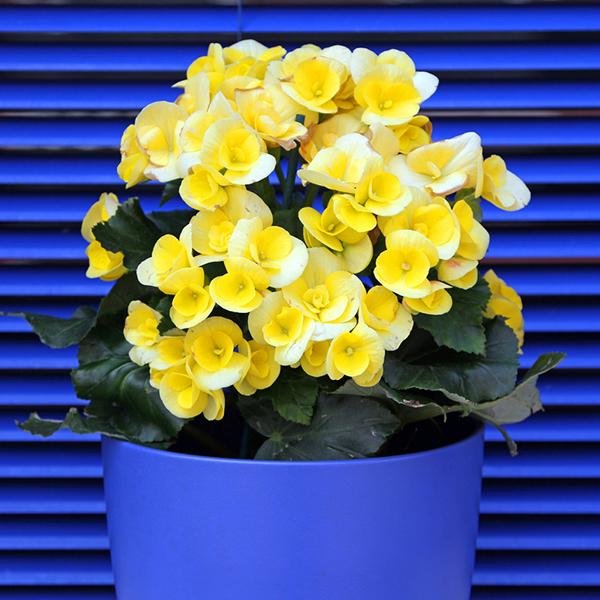 Фото №8 - Зарядись! 10 растений, которые улучшают самочувствие
