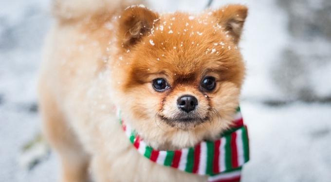 Смотреть фото и видео с милыми животными полезно для мозга