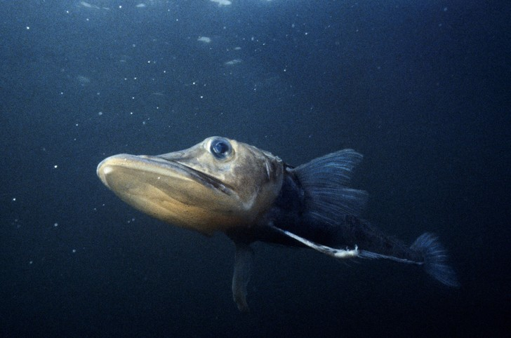 Фото №2 - Прозрачные, как стеклышко: настоящие призраки из мира животных