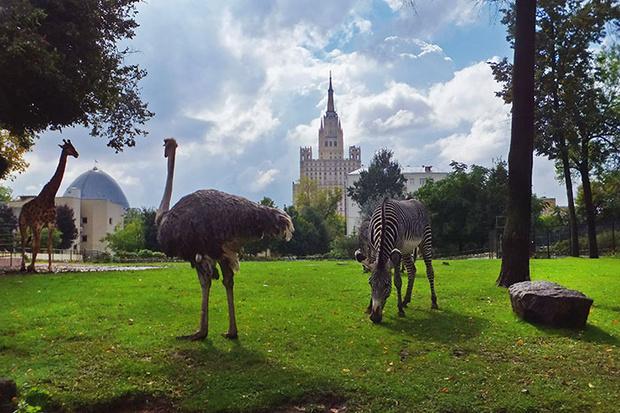 Фото №3 - Детский день в Московском зоопарке
