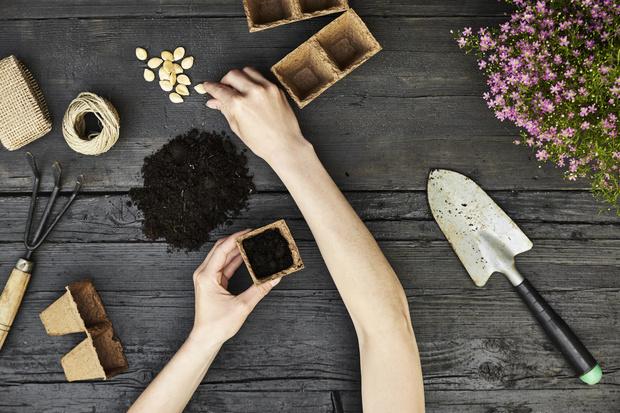 Фото №3 - Чтоб взошло: 9 правил покупки семян