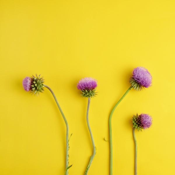 Фото №1 - Узнай, какой ты цветочек по дате рождения